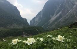 Долина цветов, Индия